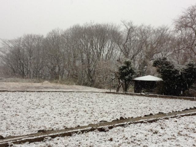 20150217雪