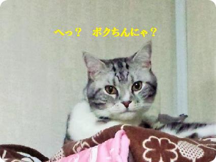 リョーマ坊ちゃん1