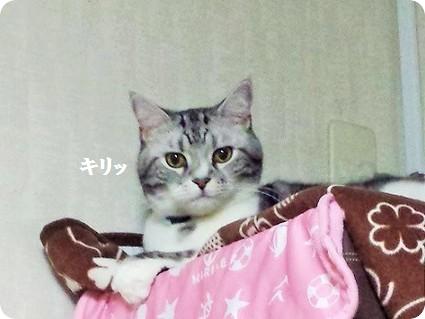 リョーマ坊ちゃん3