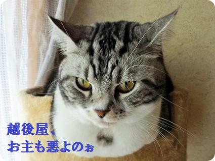 悪代官役 リョーマ1