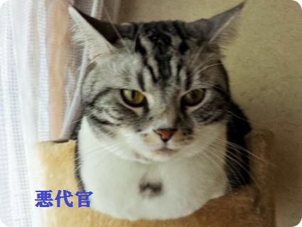 悪代官役 リョーマ2