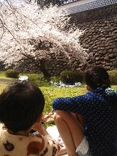 石川門でお花見