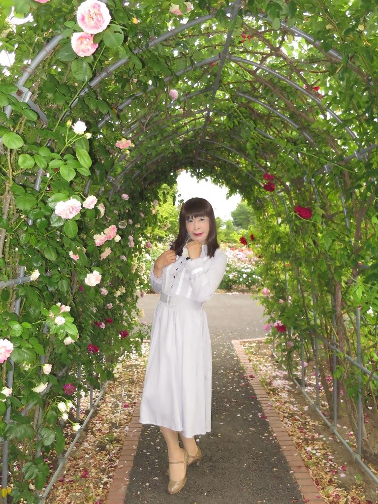薔薇とワンピF(1)