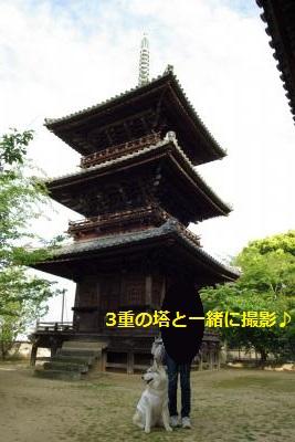IMGP7723_convert_20150511215110.jpg