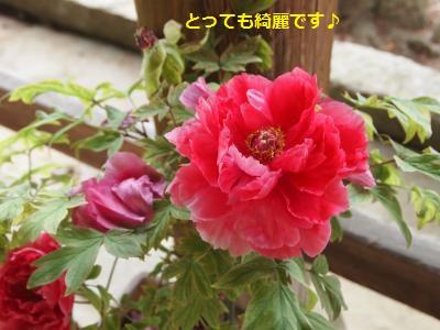 P5031144_convert_20150528225930.jpg
