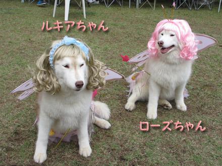 ローズちゃん&ルキアちゃん