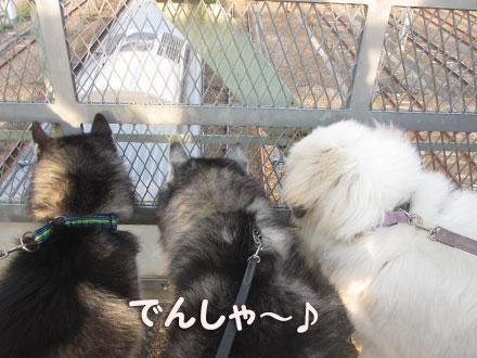 鉄犬トリオ