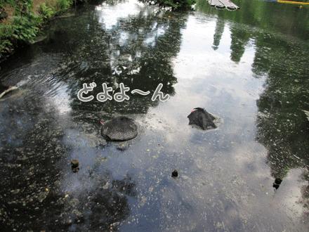きちゃないお池