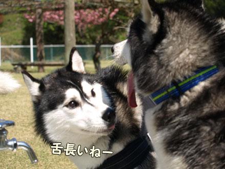 スフレ&ギンちゃん