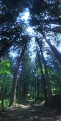 20150515CAAD10小菅杉並木
