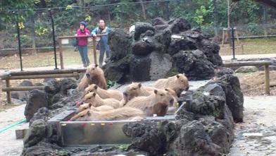 こども動物公園 (38)