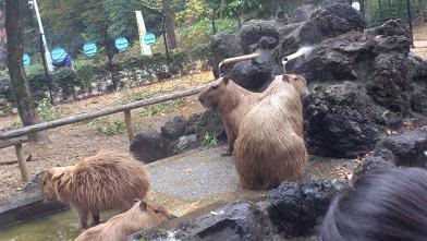 こども動物公園 (68)