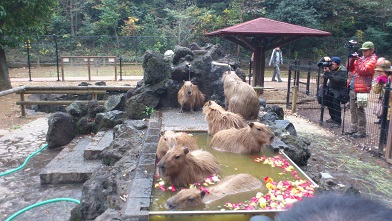 こども動物公園 (69)