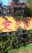 愛茶園 (2)