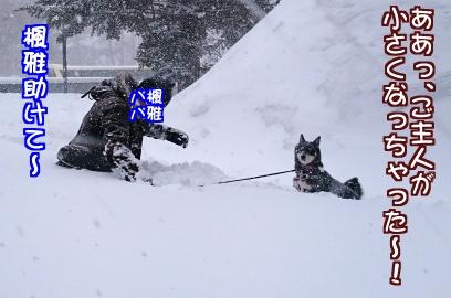 雪にはまった