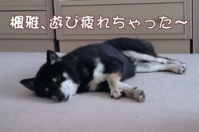 疲れちゃった~