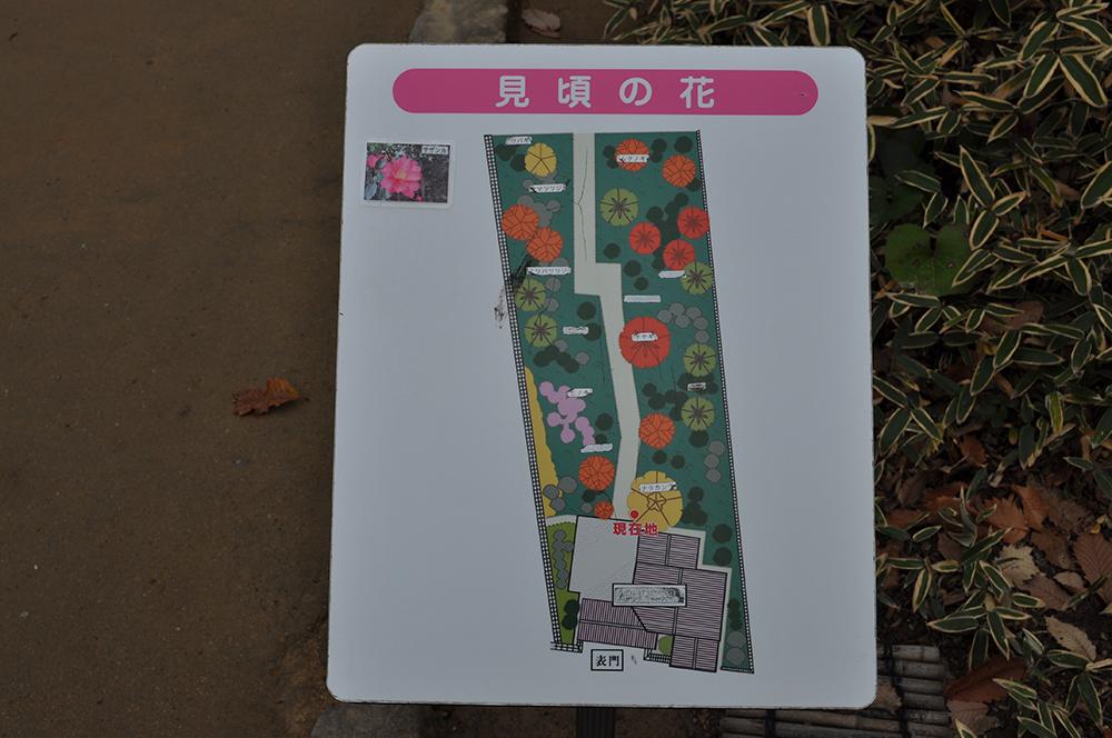 niwasuteki (5)