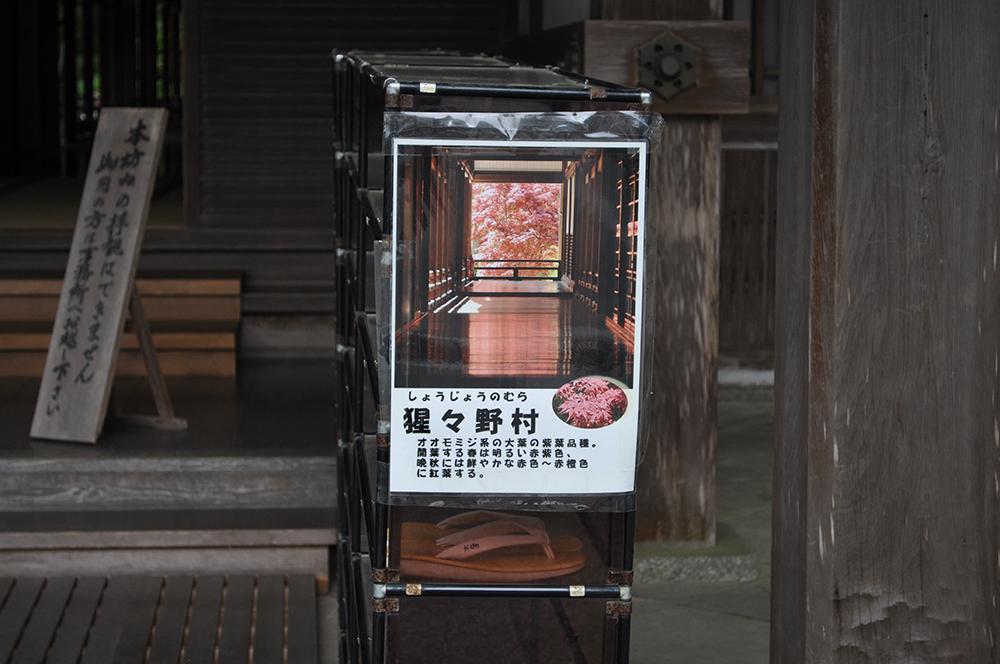 hasedera (53) - コピー