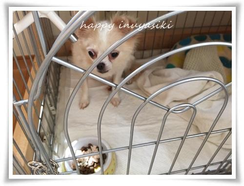 mini3IMG_0711-20150711.jpg