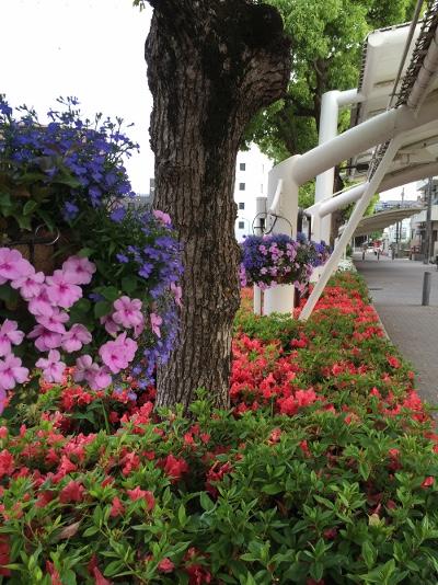 お散歩道の花1