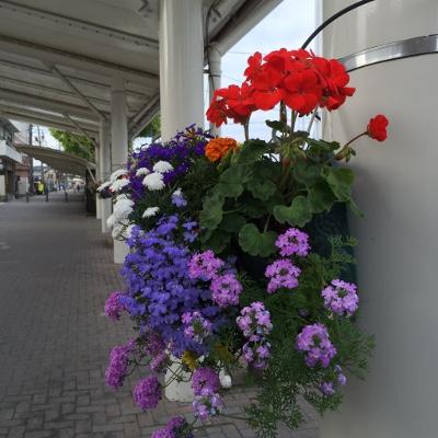 お散歩道の花2