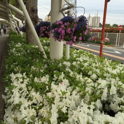 お散歩道の花3