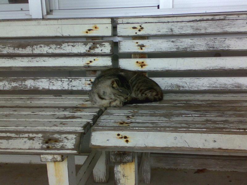 安座真の猫