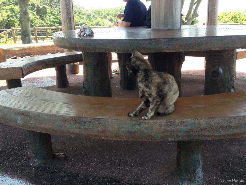 久高島の猫・サビ