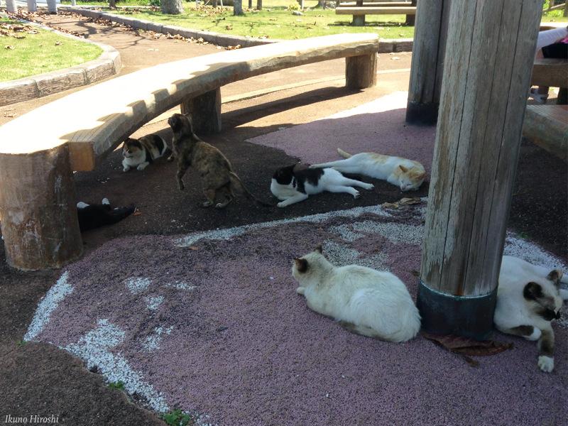 久高島の猫たち