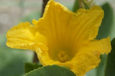 ぐりーんべびたんの花