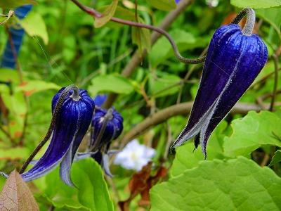 紫竹ガーデン8