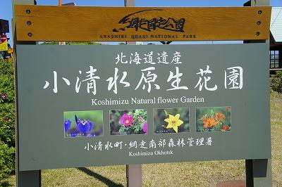 原生花園10