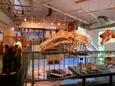 知床博物館4