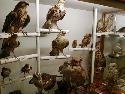 知床博物館6