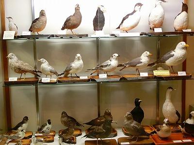 知床博物館7
