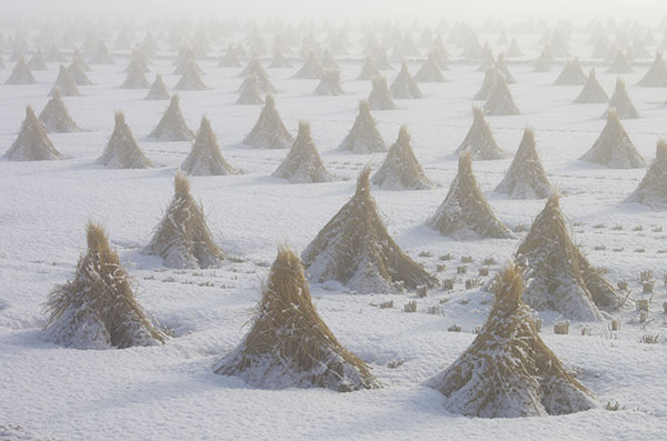 霧の中の田んぼ