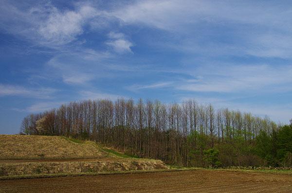 金ヶ崎町の林と空