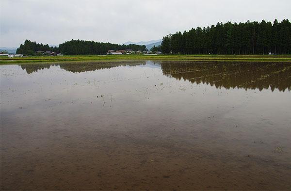 花巻空港付近の田んぼ