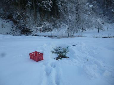 雪の中の人参