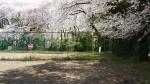 リオン株式会社内桜2