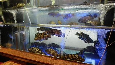 shamrock seafood restaurant