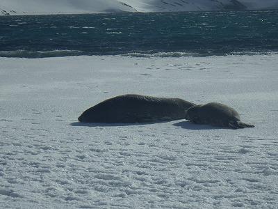 南極M1日目 (25)