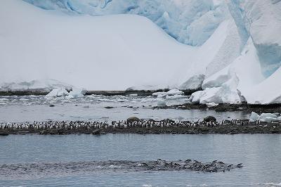 南極2日目 (5)