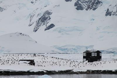 南極2日目 (6)