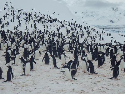 南極2日目 (20)