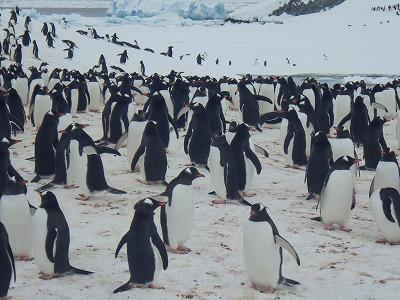 南極2日目 (21)