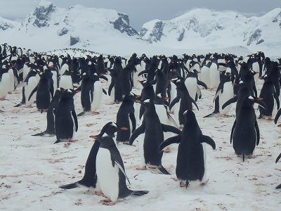 南極2日目 (24)