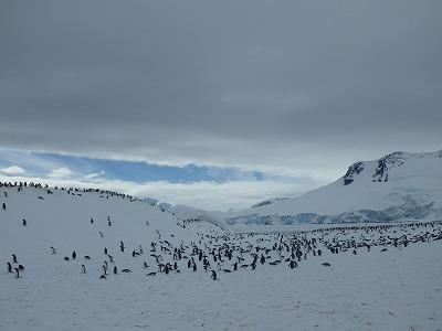 南極2日目 (25)