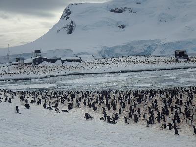 南極2日目 (33)