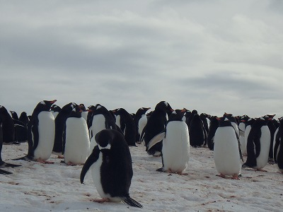 南極2日目 (34)